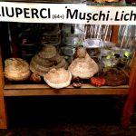 O parte din colectia de ciuperci existente în Zona Snagov