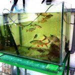 Acvarii cu: pești / plante / moluște / crustacee / insecte
